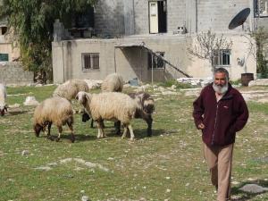 Bedouin Shepherd